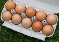 egg-2759291__480